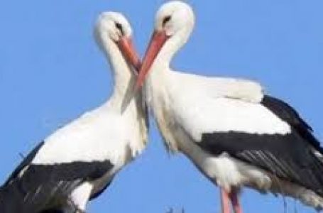 LJUBAV I ODANOST Neobična životinjska ljubavna priča iz Hrvatske oduševila Francuze