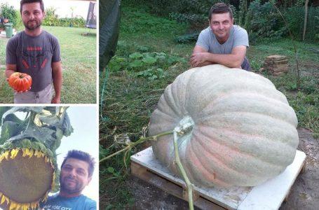 Kruno Peić iz Tovarnika (RH) uzgojio bundevu tešku 382 kg