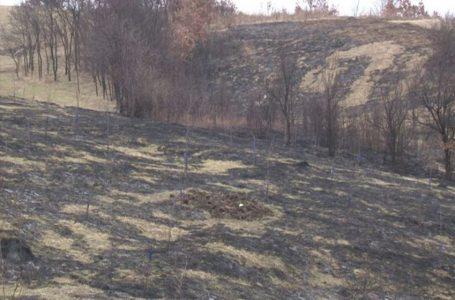 Zapaljeno tri hektra voćnjaka obitelji Kolak u Perinom Hanu