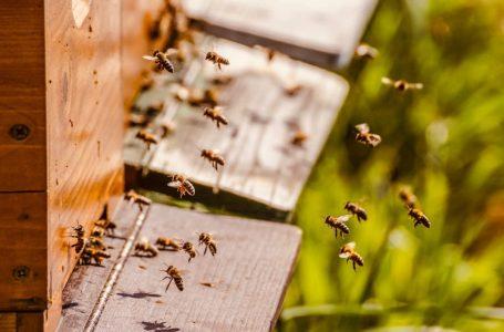 SVJETSKI DAN PČELA Znate li koliko su i zašto važne?