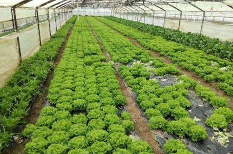 Čapljinski poljoprivrednici najavljuju vrhunsku kvalitetu uroda povrća